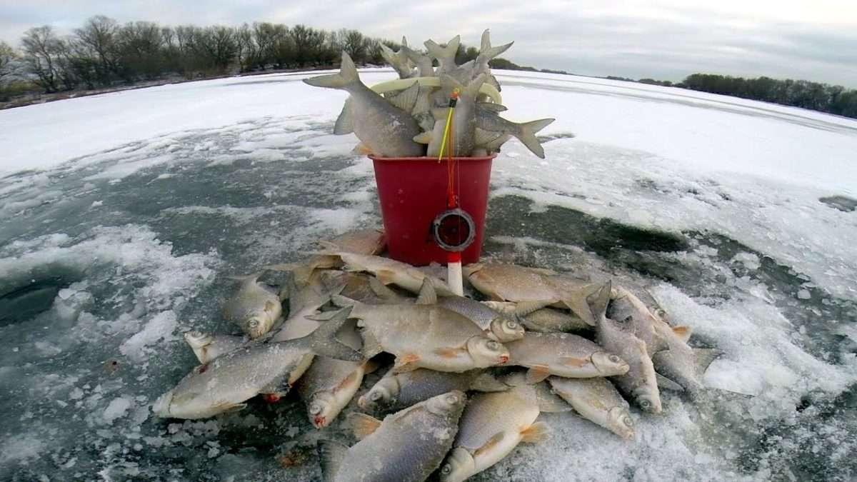 Рыбалка на Десне в Феврале