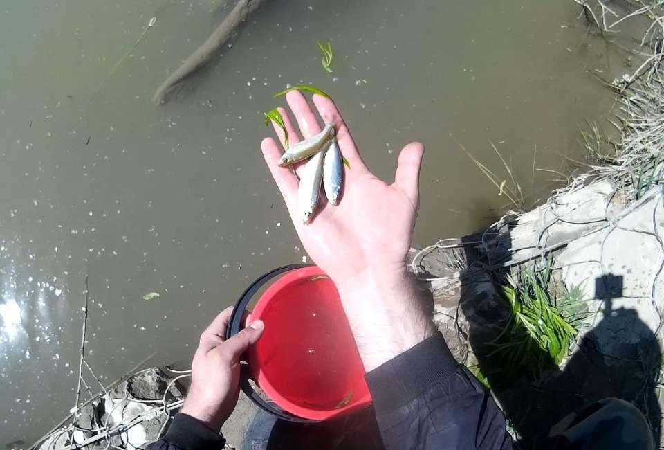 Как отсечь мелочь на рыбалке