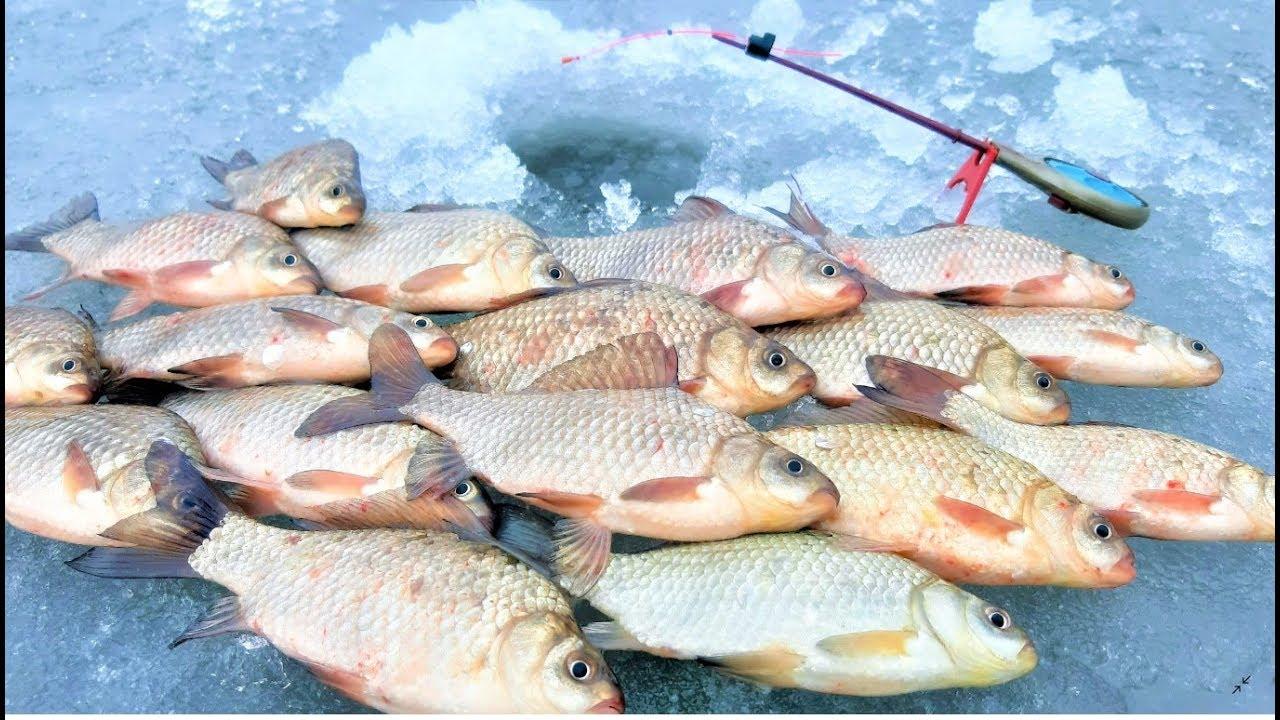 Прикормка карася на зимней рыбалке